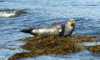 Wildlife, Isle of Arran